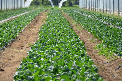 azienda_agricola_corbaribio_t1